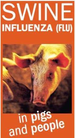 gripe-porcina1